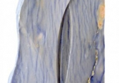 O-68 Jan Pater Fusione 2015 gneis 71 cm