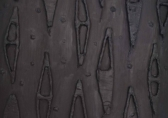 O-68 Theo Kuijpers voorstudie voor Dark field